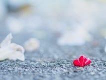 Красное сердце и белый цветок Стоковые Изображения RF
