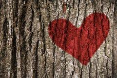 Красное сердце на дальше коре дерева Стоковое фото RF