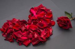 Красное сердце с подняло Стоковые Изображения