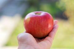 Красное сладостное яблоко в руке стоковые фото