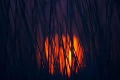 красное солнце Стоковое Изображение RF