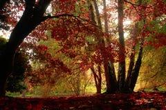 красное солнце Стоковое Изображение