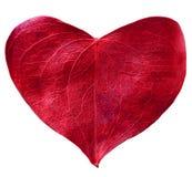 Красное сформированное сердце лист Стоковые Изображения