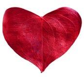 Красное сформированное сердце лист Стоковая Фотография RF