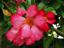 красное цветене цветка Стоковое фото RF