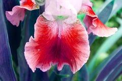 Красное цветение орхидеи - зацветая сад цветет в лете, дизайне щетки акварели стоковое фото