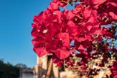 Красное цветение Стоковые Изображения RF