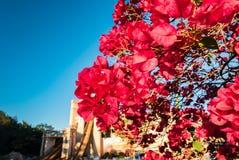 Красное цветение Стоковая Фотография RF