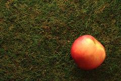 Красное яблоко на зеленой предпосылке стоковые фото