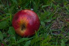 Красное яблоко на траве t стоковое изображение