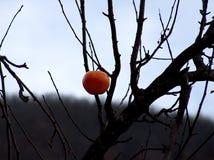 Красное яблоко Allone на дереве стоковая фотография rf