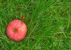 Красное яблоко в зеленой траве Стоковое Изображение RF