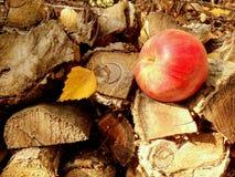 Красное яблоко осени на штабелированной древесине Стоковые Изображения RF