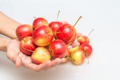 Красное яблоко растет в руке Стоковые Фотографии RF