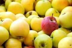 Красное яблоко среди группы в составе желтые яблоки Стоковая Фотография