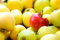 Красное яблоко среди группы в составе желтые яблоки Стоковое Изображение RF