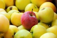 Красное яблоко среди группы в составе желтые яблоки Стоковое фото RF