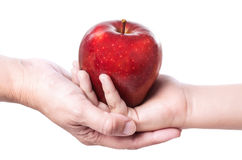 Красное яблоко 12 Стоковая Фотография RF