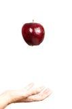 Красное яблоко 14 Стоковая Фотография RF