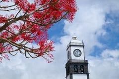 Красное blossoming дерево в городе Ponta Delgada, Азорских островах, Португалии Стоковые Изображения RF