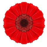 Красное Kaleidoscopic цветка мандалы Gerbera изолированное на белизне Стоковое фото RF