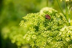 Красное Netteroptera в зеленых цветках взгляд сверху стоковое фото rf