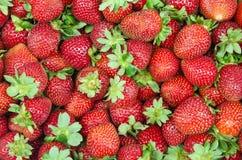 Красное Strawberrys Стоковая Фотография RF