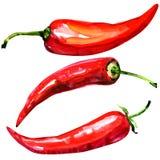 Краснокалильные перцы chili на белой предпосылке иллюстрация штока