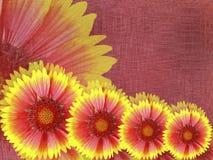 Красно-желтые цветки, на бургундской предпосылке ткани яркий состав флористический Карточка на праздник Стоковые Фото