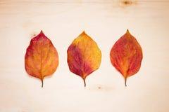 3 красно-желтых листь на доске Стоковые Изображения
