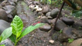 Красно-замкнутый dragonfly Стоковые Фотографии RF