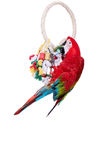 Красно-и-зеленая ара на белой предпосылке Стоковое Изображение RF