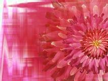 Красно-розовые цветки осени, на красным предпосылке запачканной пинком closeup яркий состав флористический дополнительный праздни иллюстрация штока