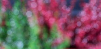 Красно-фиолетовое flowers2 Стоковое Изображение