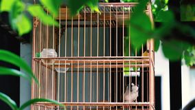 Красно--whiskered птица bulbul поя в клетке сток-видео