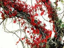 Красные бабочки осени? Стоковые Изображения