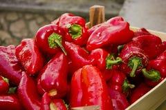 Красные болгарские перцы свежие Стоковые Изображения