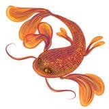 Красные большие рыбы Стоковое фото RF