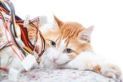 Красные взрослые провода кота и компьютера Стоковое Изображение RF