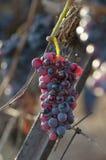 Красные виноградины Стоковое Изображение RF