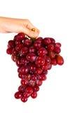 Красные виноградины Стоковые Фото