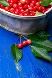Красные вишни в белой корзине на голубой деревянной предпосылке поднимающее вверх вишни близкое Стоковая Фотография