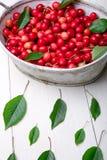 Красные вишни в белой корзине на белой деревянной предпосылке поднимающее вверх вишни близкое Стоковое Изображение
