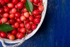 Красные вишни в белой корзине на голубой деревянной предпосылке поднимающее вверх вишни близкое Взгляд сверху скопируйте космос Стоковое Фото