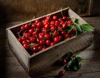Красные вишни в деревянной коробке на серой предпосылке Стоковая Фотография RF