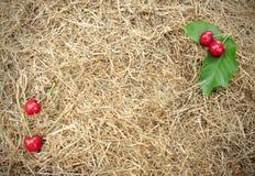 Красные вишни имеют зеленые листья на коричневом сене соломы для предпосылки Стоковые Фото