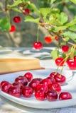 Красные вишни на плите и ягодах на ветви Стоковое Изображение