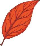 Красные высушенные лист бука бесплатная иллюстрация