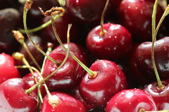 Красные влажные сочные вишни с водой падают предпосылка Стоковое Изображение