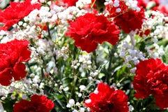 Красные гвоздики стоят в букете в солнечном свете Стоковые Изображения RF